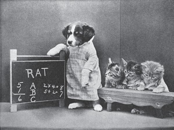 Dog and kittens staged in classroom